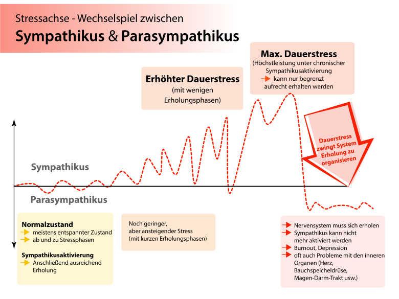 Stressachse - dynamisches Wechselspiel zwischen Sympathikus und Parasympathikus mit stressbedingtem Ende in einer Sackgasse