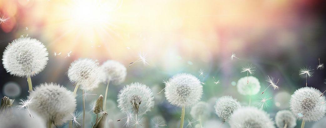 Hypnose bei Allergien