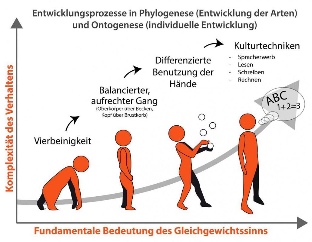 Der Gleichgewichtssinn in Phylogenese (Entwicklung der Arten) und Ontogenese (individuelle Entwicklung)