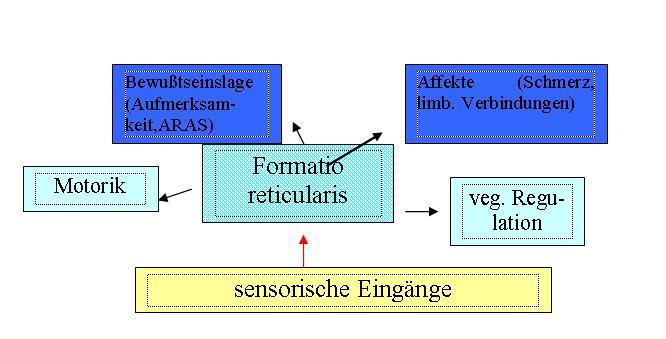 Vernetzung der formatio reticularis mit anderen Hirnstrukturen