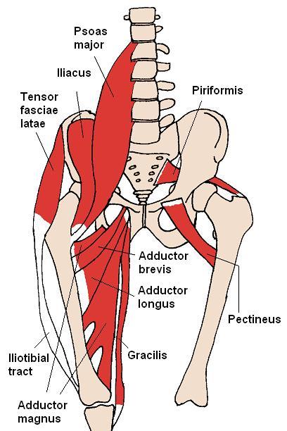 Psoas major, psoas minor und Iliacus Muskeln - Schmerzen im unteren Rücken, teils in den Bauchraum ausstrahlend