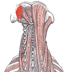 Nackenmuskeln Nackenschmerzen