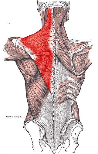 Trapezius Schulterschmerzen frozen shoulder