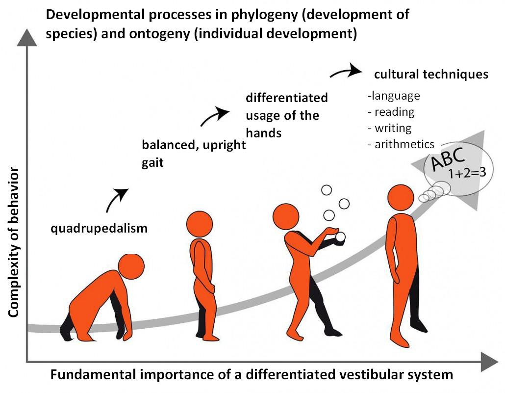 hypnotherapy related to different developmental stages in phylogeny and ontogeny